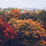 Fall colored trees from above with big city buildings in Berlin, Germany