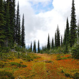 At the top of Mt. Revelstoke