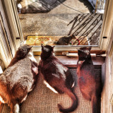 Fred, Dutch, & Frank watching Mamma Squirrel. Their favorite pass time.