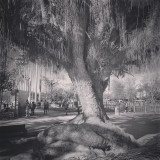 A respected elder tree in the park...