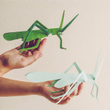 Grasshopper for kids