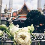 Grand Palace, Bangkok Thailand. Flower being offered to the Buddha.