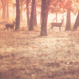 Visitors on a Fall morning