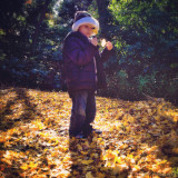 My Son in Japan... Being Curious of Gingko Leaves