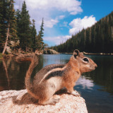 Chipmunk at Rocky Mountain National Park