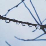 Branches in a drop
