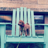 Little dog on giant chair.