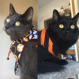 Cinder and Diesel are ready for Halloween!