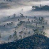 Hill Country, Sri Lanka. One would never guess that underneath that misty haze lies an endless expanse of lush tea terraces. The slow-growing tea bushes of this highland region produce some of the world's finest Tea.