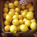 can't help but take a snapshot of these fresh lemons with the vendor's permission of course, 'cause when life give you lemons...
