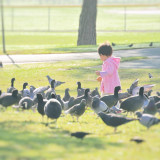 A little girl, wearing a pink sweater, is playing among pigeons at the park.