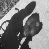 A man and his dog in shadow.  You can see the man in his wheel chair holding A balloon in the shape of a heart and the leash to a small dog who's looking up at him.  This is all cast on the sidewalk behind them is the grass and this is in black-and-white.