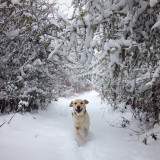 Maggie loves the snow