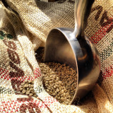 A scoop in a sack of green coffee beans. Measuring for roasting.