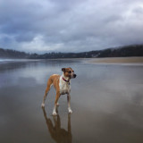 Phoebe at Agate Beach