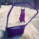 Holiday cheer! Thanks for your help with the driveway, Pepper!