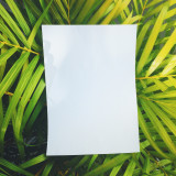 White blank paper on tropical plant backgroung