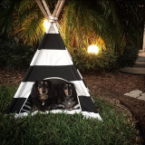 Camping out in the back yard.