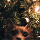 Rosie in the tree !!! :)