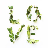 Boxwood leaf branches spelling out LOVE on white background