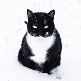 Cat sitting in snow and glancing