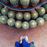 Looking down, shopping for cacti. || Cactus Joe's near Red Rock Canyon in Las Vegas, NV