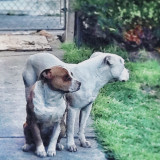 In memory of Marley (died April 2014) and Cinnamon (died Jan. 2016). A heavy loss.