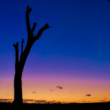 Dead tree silhouetted by sunset at Perry's Paddock, Perth, Western Australia.  I especially like this one because I think the tree looks like a scary giant, waving his huge arms in the air!  :D
