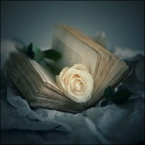 ✨🌹✨ The Book ✨🌹✨