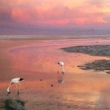 Landscape with flamingos sunset pink sky