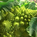 Romanesco at our neighborhood family farm. Underwood Family Farms, Somis.