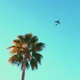 Solo airplane taking off into the sky with a palm tree