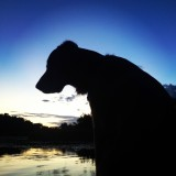 Dog silhouette by water