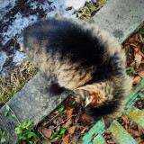 Fluffy kitty outdoors