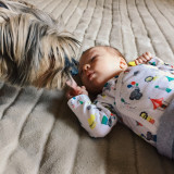 Family pet meeting newborn baby