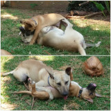 Afternoon wrestling match