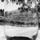 A glass of Pinot Noir wine at the Imagery Winery vineyard in the Russian River Valley in California.