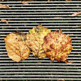 Fallen Autumn leaves on metal grid