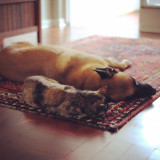 Love. Sleeping dog and cat