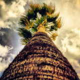 #palm #tree #leaves #wood #sky #cloud #texture #hdr