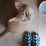 Puss and boots.