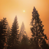 Smoke through the trees- forest fire