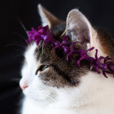 Cat with flowercrown