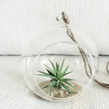 Houseplant in a glass bowl