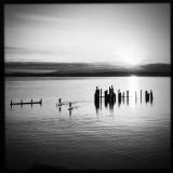 paddlers on the puget sound at sunset