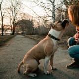 Young woman in the sunny spring park is showing love to her staffordshire terrier dog at evening while sunset.