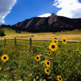 Boulder Flatirons with Sunflowers