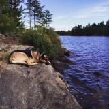 My pup taking a nap in front of the lake!