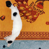 White cat on a mat