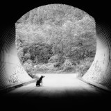 Even dogs can see the light at the end of the tunnel.